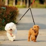Laisse-double-Laisse-pour-chiens-Laisse-double-pour chien