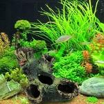 Tronc-arbre-aquarium-Tronc-decoration-aquarium-Decoration-aquarium