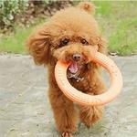 Jouet-a-lancer-pour-chien-Jouets-pour-chiots-Jouets-pour-animaux-Jouet-pas-cher