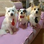Cravate-pour-chien-Cravate-pour-chat-Vetement-pour-chien-Vetement-pour-chat