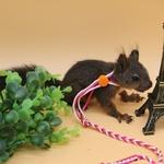 Harnais-pour-hamster-Laisse-pour-hamster-Harnais-pour-souris-Harnais-pour-rongeur
