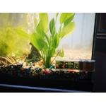 Thermometre-aquarium-Thermometre-digital-aquarium-Thermometre-numerique-aquarium-Thermometre-aquarium-precis