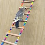 Echelle-pour-perroquet-Echelle-pour-oiseau-Jouet-pour-oiseau-Jouet-perles-oiseau
