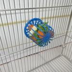 Mangeoire-pour-cage-oiseaux-Mangeoire-oiseaux-Panier-fruits-pour-perroquet