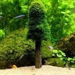 Sapin-noel-pour-aquarium-Plante-noel-pour-aquarium-Decoration-noel-aquarium-Décoration-aquarium-naturel-Idee-decoration-aquarium-Décoration-aquarium-originale