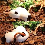 Cachette-reptile-plastique-Cachette-pour-reptile-Decoration-terrarium