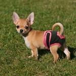 Culotte-hygienique-pour-chien-Menstruation-chien-femelle-Protection-anti-saillie-Slip-hygienique-pour-chien-Culotte-pour-chienne-Protection-plaie-genitale