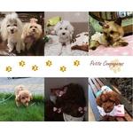 Elastique-pour-chien-Barrette-pour-chien-Nœud-elastique-pour-chien-Noeud-pour-chien-Pinces-luxe-pour-chien