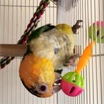 Hochet-pour-oiseau-Jouet-patte-perroquet-Jouet-clochettes-oiseaux
