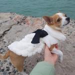 Manteau-fourrure-pour-chien-Manteau-fourrure-pour-chat-Vetement-fourrure-chat-Vetement-fourrure-chien