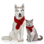 Echarpe-de-noel-pour-chien-et-chat-Echarpe-pour-chiens-et-chats-Echarpe-animaux-de-compagnie