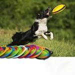 Bol-pliable-en-Silicone-pour-chien-chat-Bol-de-voyage-Accessoire-de-transport-animaux-de-compagnie