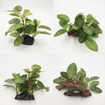 Feuillage-artificiel-aquarium-Plante-artificielle-aquarium-Plante-synthetique-aquarium
