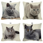 Coussin-chat-Housse-coussin-chat-chartreux-Coussin-chat-chartreux-Coussin-avec-photo-chartreux
