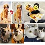 Coussin-personnalise-Coussin-3d-personnalise-Coussin-forme-chien-Coussin-forme-chat