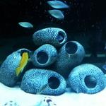 Cachette-cave-aquarium-Grotte-aquarium-Cachette-cichlides-Cachette-crevettes-aquarium
