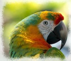 page oiseaux