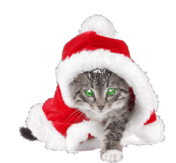 Colliers-noel-pour-chats