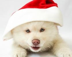 Jouets-noel-pour-chiens