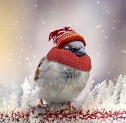Boutique-noel-pour-oiseaux