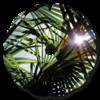 palmier_soleil_flasque_fauteuil_roulant_02