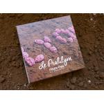 Le Pralilyon®, bonbon de chocolat, spécialité lyonnaise