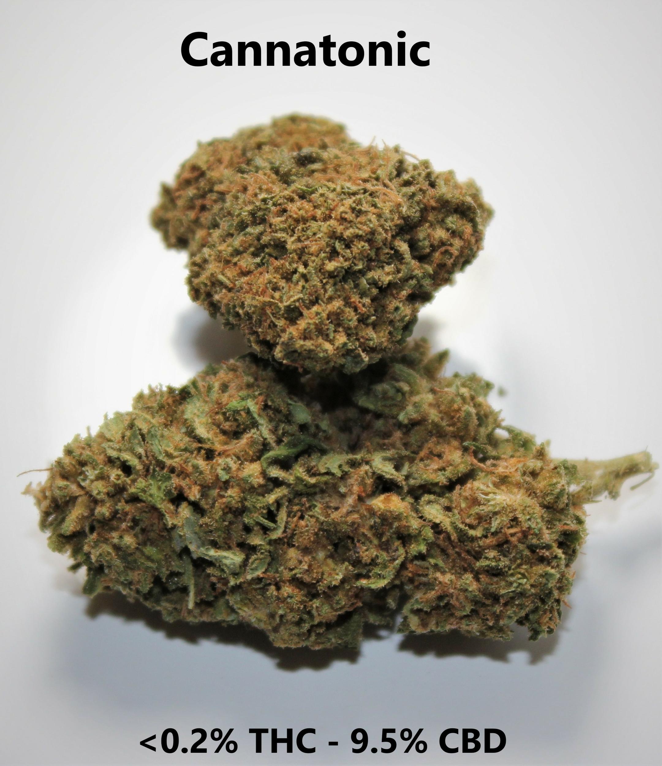 Cannatonic - <0.2% THC / 7% CBD