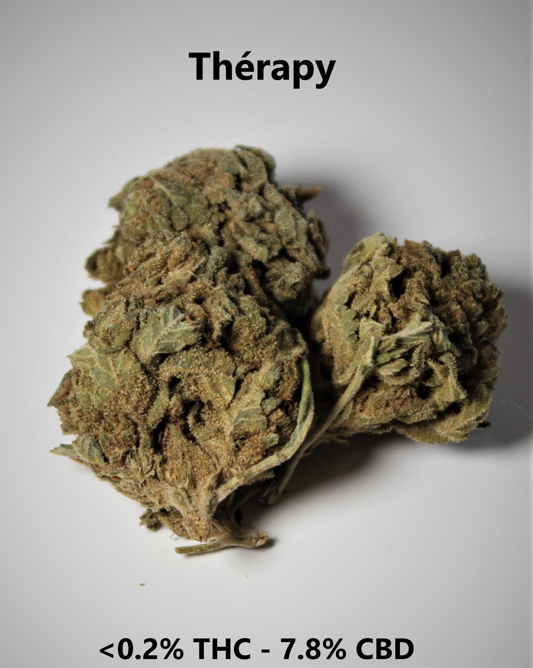 Thérapy   <0.2% THC - 7.8% CBD