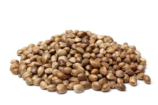Graines CBD - Kompolti Hybrid TC - <0.2% THC / >5% CBD