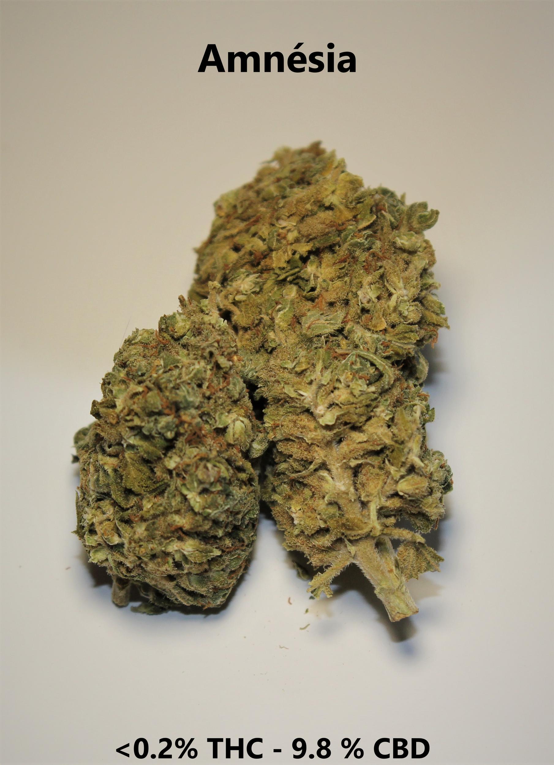 Amnésia - <0.2% THC / 9.8% CBD