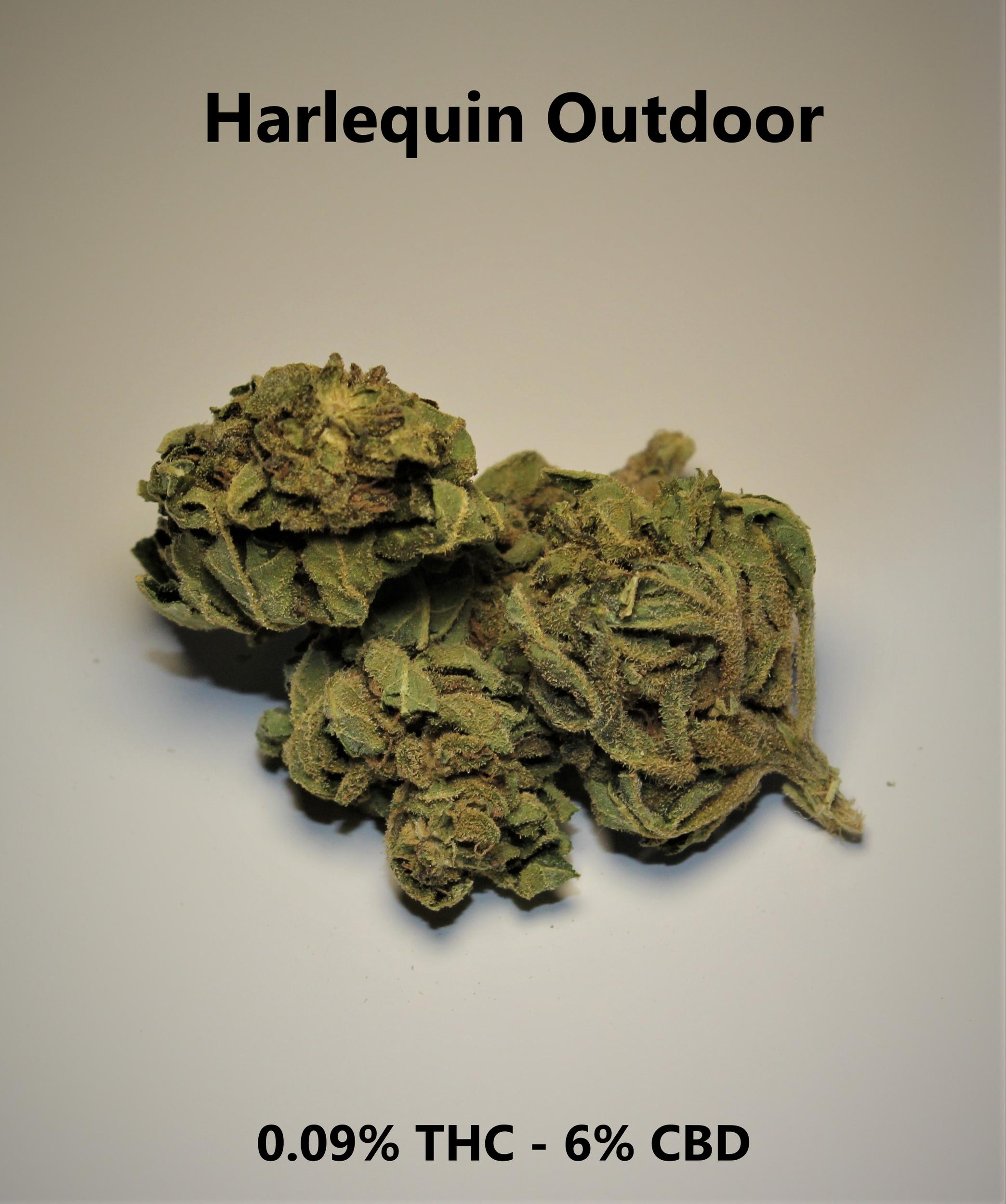 Harlequin outdoor