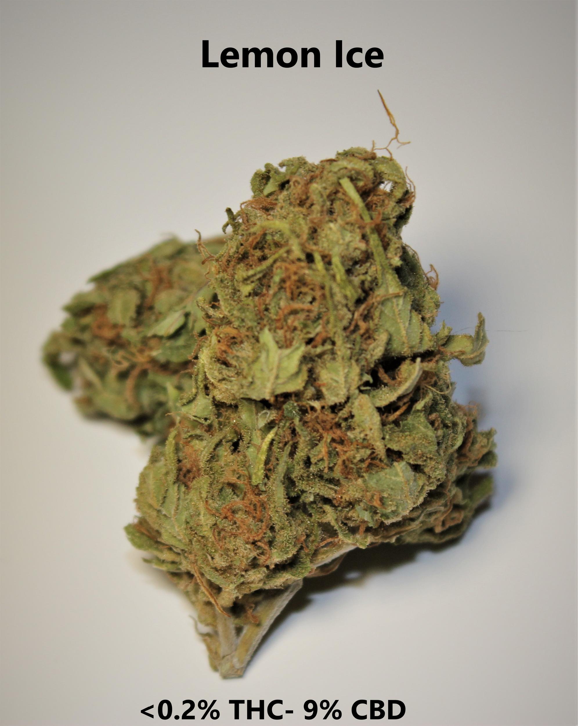 Lemon Ice   <0.2% THC / 9% CBD