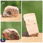 bois fossilise 1