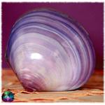 petit coffret coquillage et paua violet 4