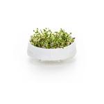 Kefirko Kefir Fermenter Sprouts 3