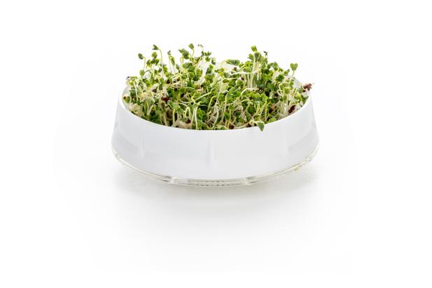 Kefirko Kefir Fermenter Sprouts 3 (2)