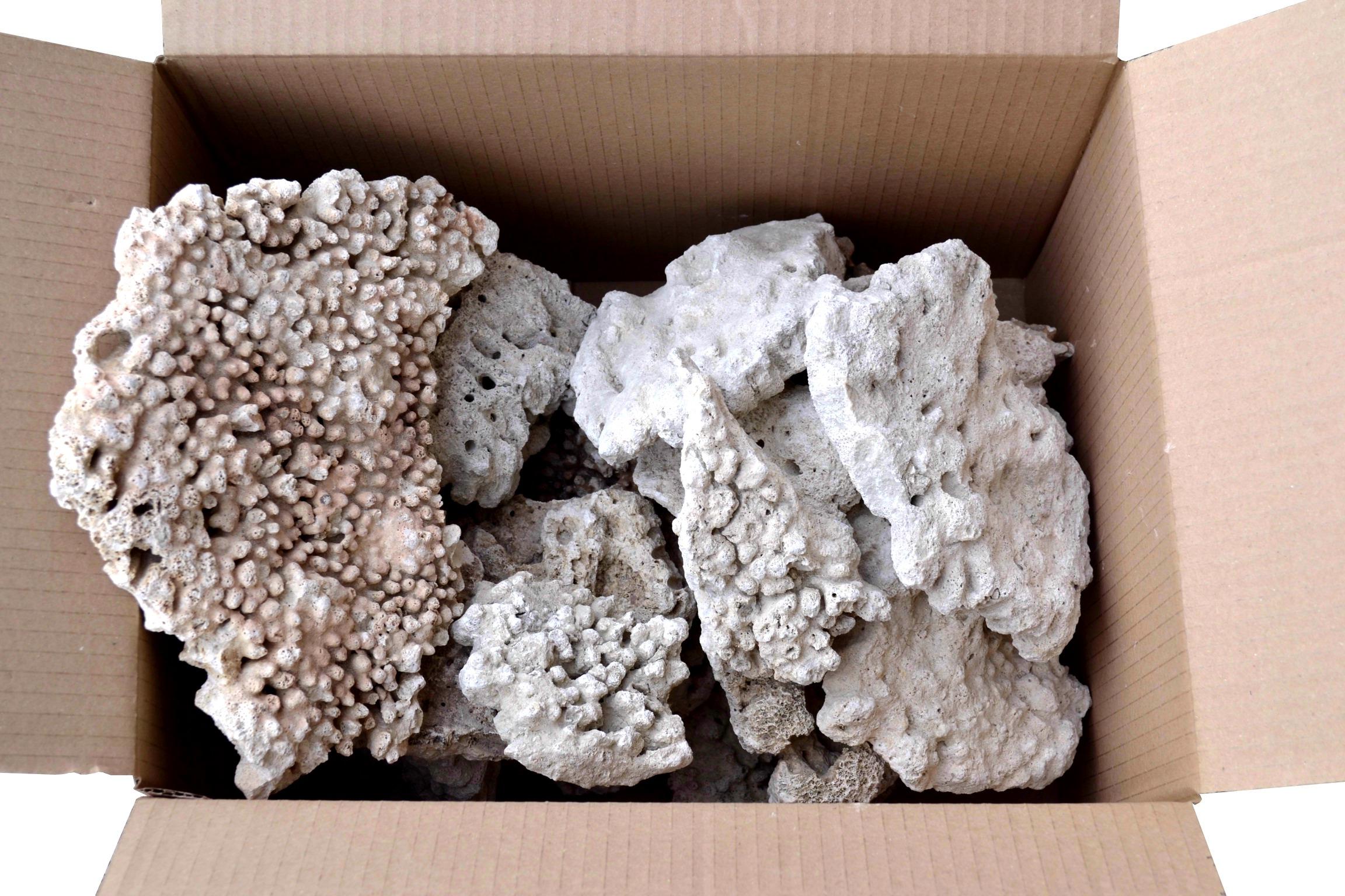 Caisse de 5 Kg de Coraux morts en morceaux d\'environ 15 à 30 cm pour aquarium d\'eau de mer