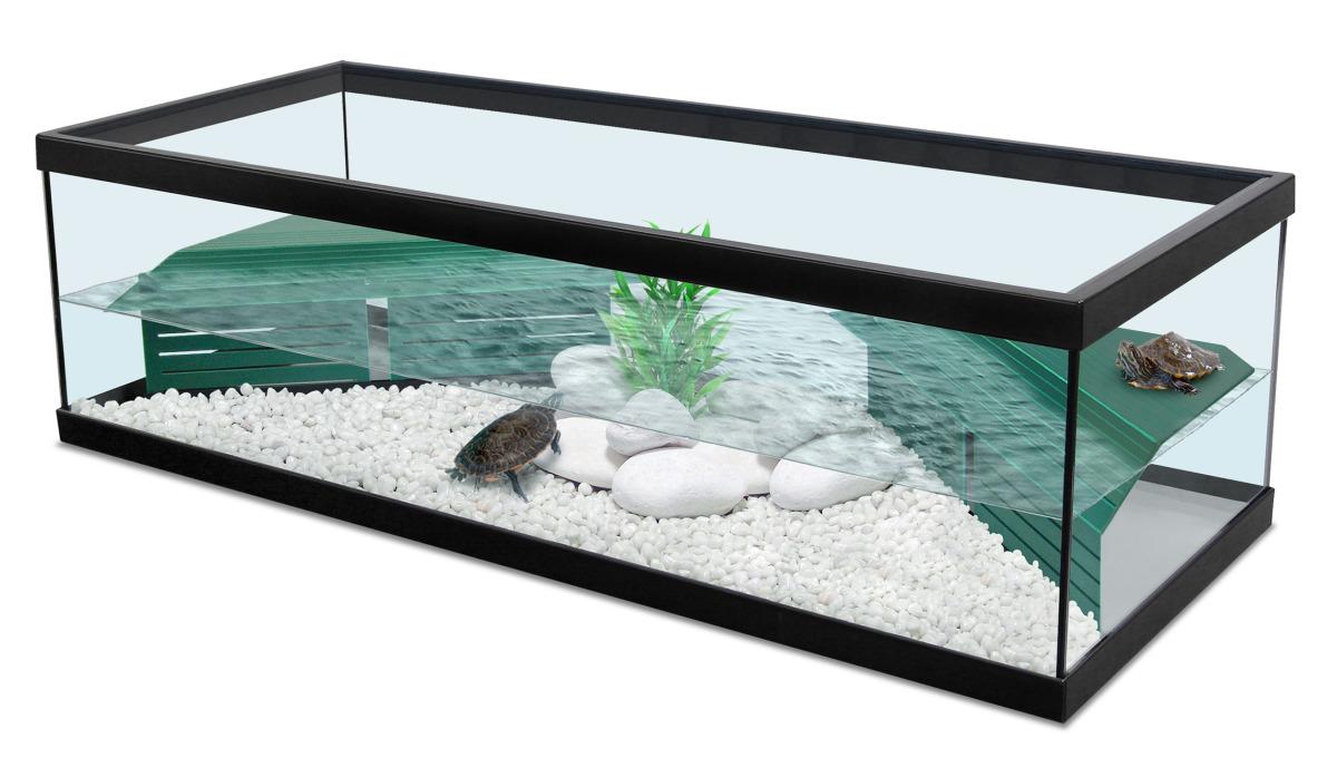 terrarium tortue deau