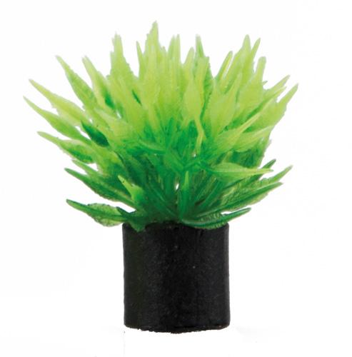 Utricularia-mini