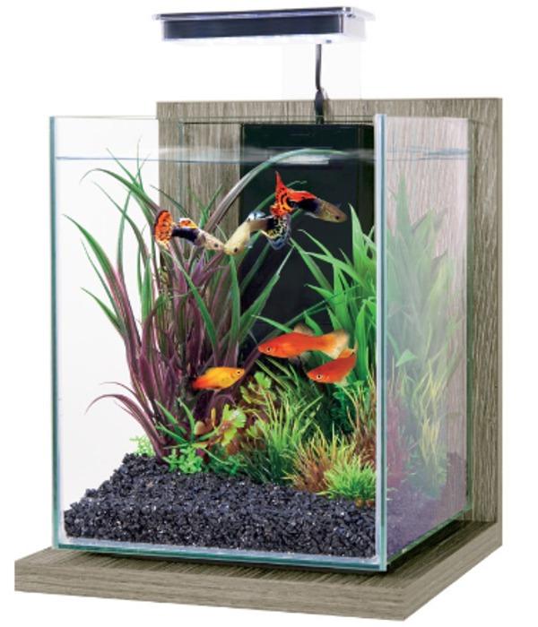 ZOLUX Jalaya Zebrano Gris 9,3L kit nano-aquarium équipé avec éclairage LEDs