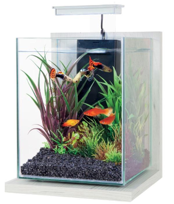 ZOLUX Jalaya Ceruse Blanc 9,3L kit nano-aquarium équipé avec éclairage LEDs