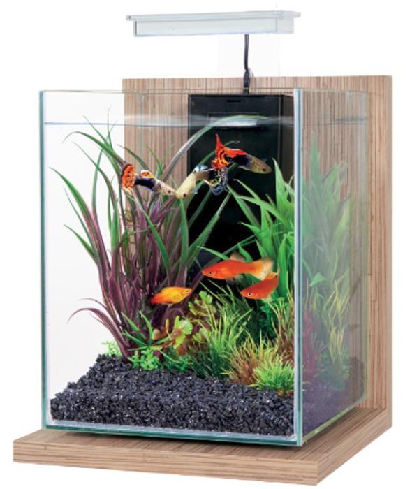 ZOLUX Jalaya Bambou Beige 9,3L kit nano-aquarium équipé avec éclairage LEDs