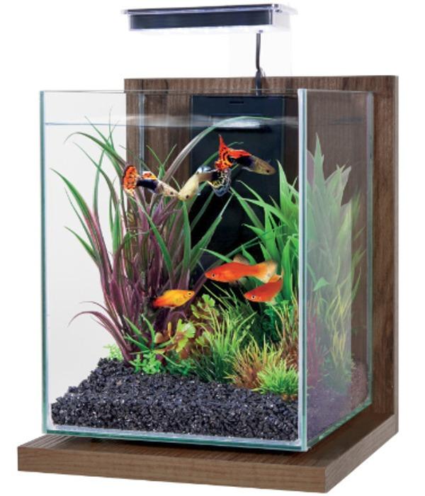 ZOLUX Jalaya Noyer Brun 9,3L kit nano-aquarium équipé avec éclairage LEDs