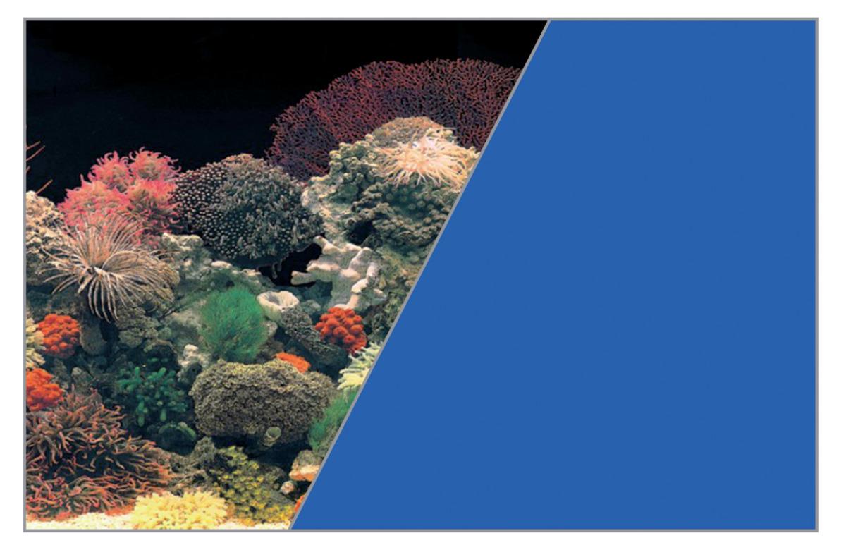 ZOLUX Poster d\'aquarium fond Corail et Bleu. Longueur 40 cm x 30 cm de hauteur