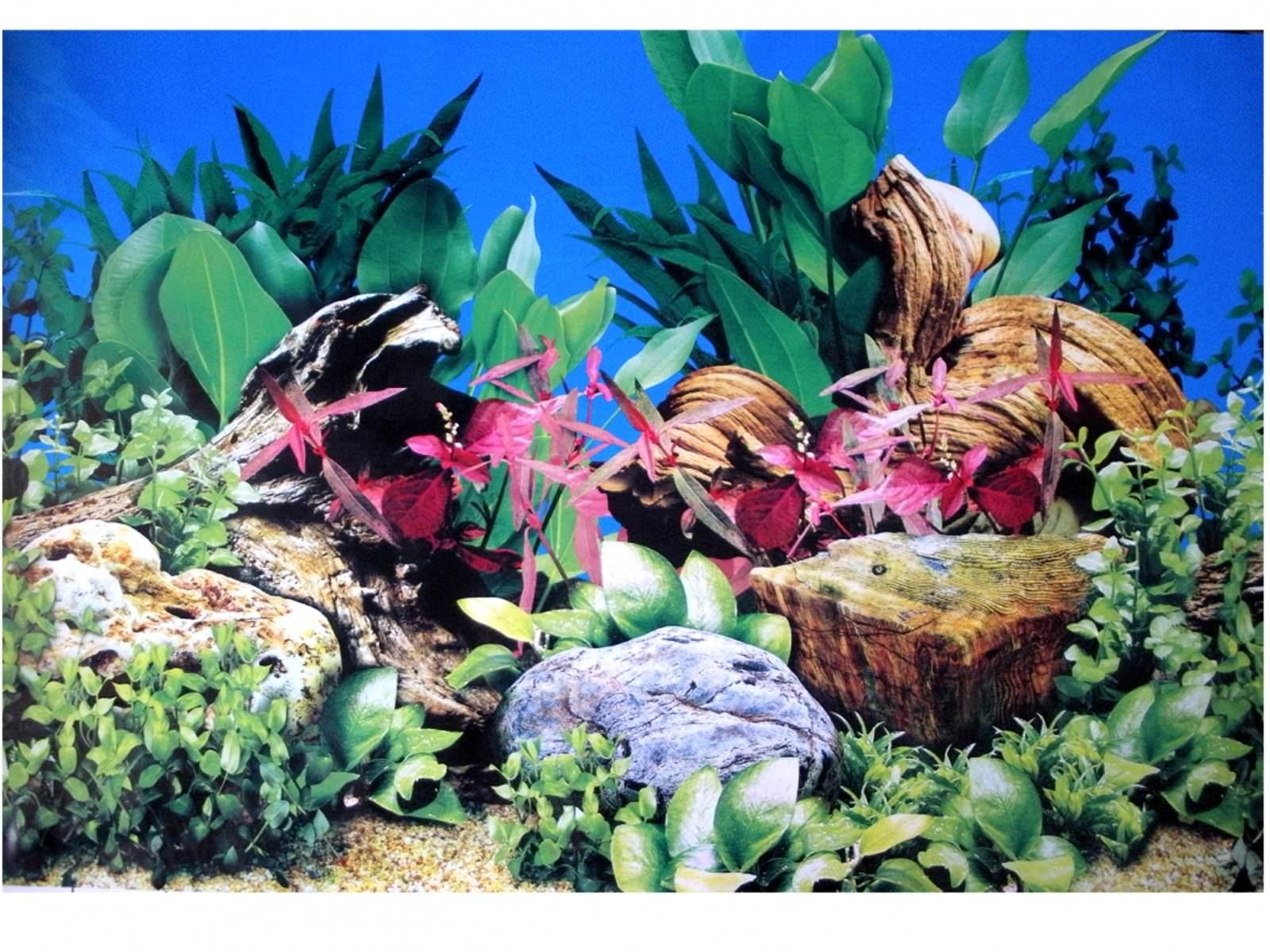 Poster d\'aquarium à la coupe Aquarium Planté, imprimé sur une face. Hauteur 60cm