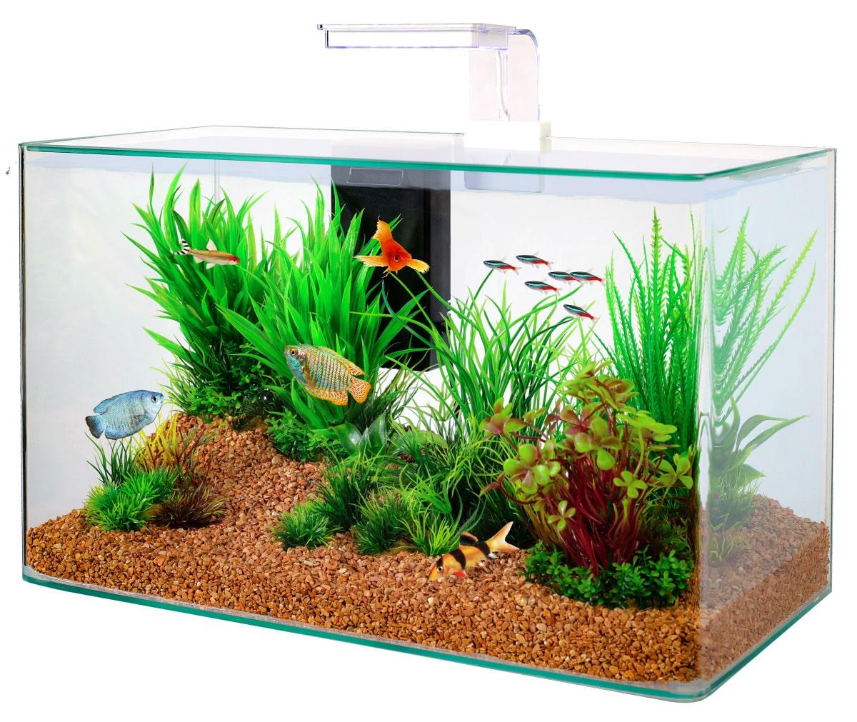 ZOLUX Aqua Clear 50 Blanc aquarium 32 L avec éclairage LEDs et filtre interne