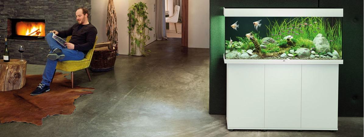 Idée décoration aquarium JUWEL Rio 240 LED