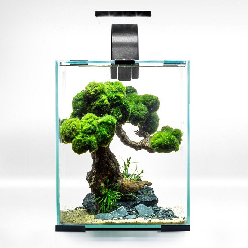 AQUAEL ShrimpSet Day & Night 10 Noir nano-aquarium 10L tout équipé 20 x 20 x 25 cm