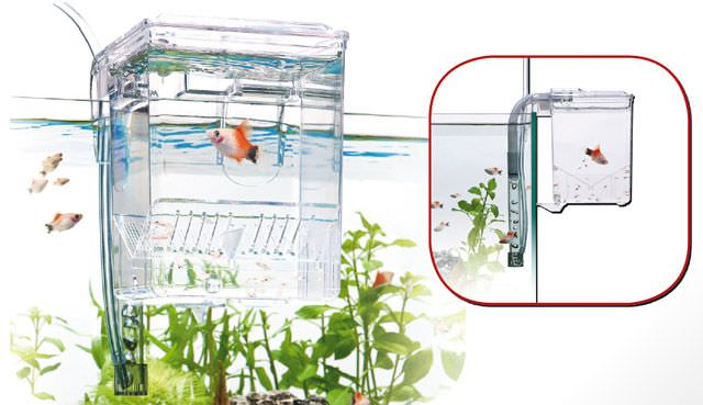 WAVE Breeding Box Small isoloir externe de 0,7L avec système de renouvellement automatique de l\'eau.