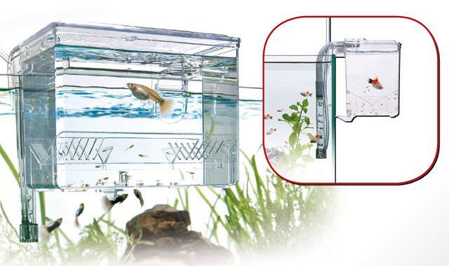 WAVE Breeding Box Large isoloir externe de 1,2L avec système de renouvellement automatique de l\'eau.